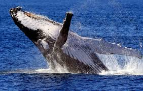 Enjoy a Whale Watching Adventure in Cabarita Beach