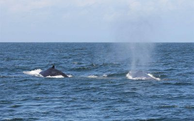 See Migrating Humpback Whales on the Tweed Coast This Winter